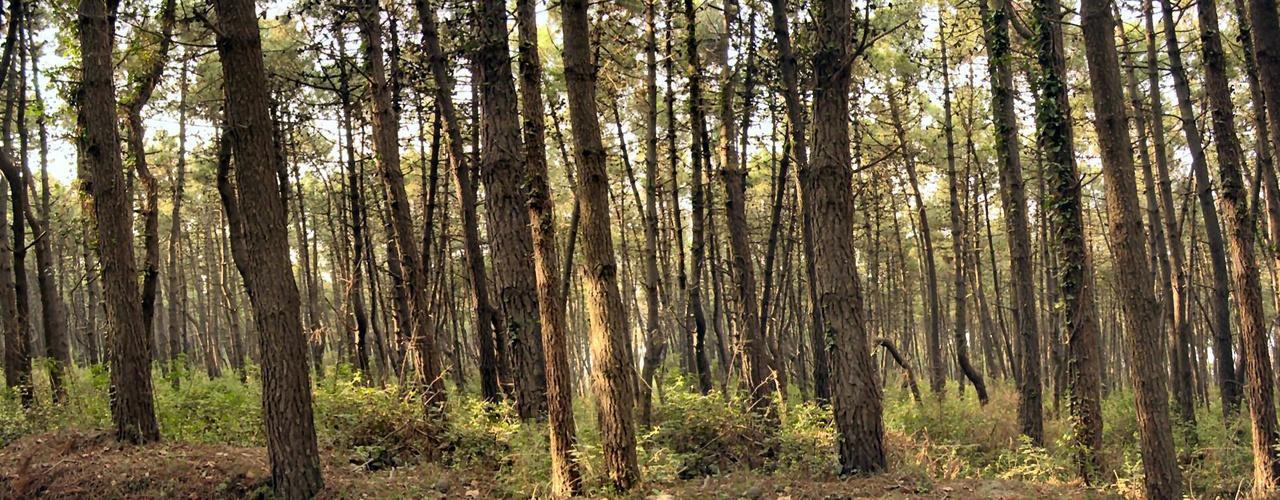 Uninuoro - Corso di Laurea Triennale in Scienze Forestali e Ambientali