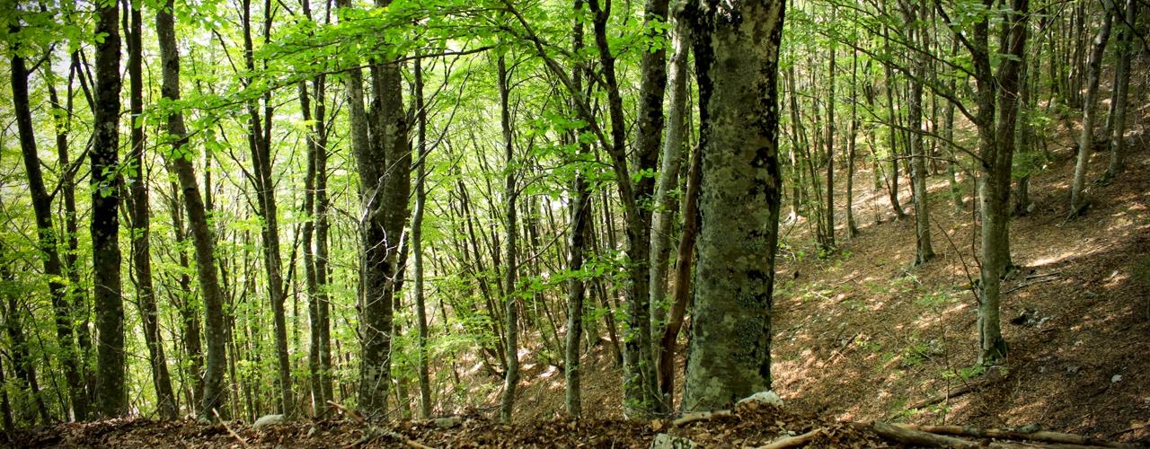 Corso di Laurea Magistrale in Sistemi Forestali e Ambientali